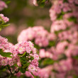 Pink flowers — Stock Photo #10581600