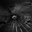Spiderweb — Stock Photo #8617111