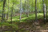 Svenska skogsmark i sommar — Stockfoto