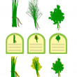 Stock Vector: Herbs vector