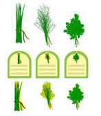 Herbs vector — Stock Vector