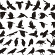 Stock Vector: Bird carrion crow