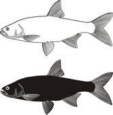 Asp predatory freshwater fish — Stock Vector