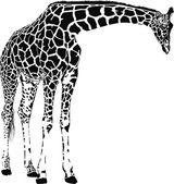 Zürafa vektör — Stok Vektör