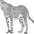 Stock Vector: Gepard - Black and white cheetah