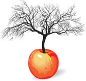 Apple tree from fruit — Stock Vector