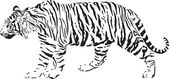 Tiger - Black and white vector illustration — Stock Vector