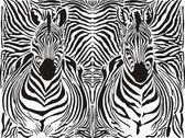 Zebra pattern background — Stock Vector