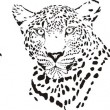Head of cheetah, leopard and tiger — Stock Vector
