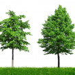 Four young green trees — Stock Photo