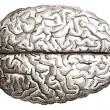 Old engraving of human brains — Stock Photo #9355044