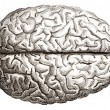 Old engraving of human brains - Stock Photo
