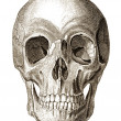 Skull illustration - Photo