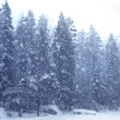 Snow falling forest — Stock Photo
