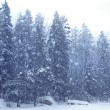 Snow falling forest - Foto de Stock  