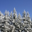 Snowy forest - Foto de Stock  
