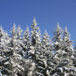 Snowy forest -  