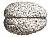 Old engraving of human brains — Stock Photo