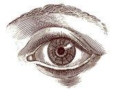 Menselijk oog oude gravure — Stockfoto