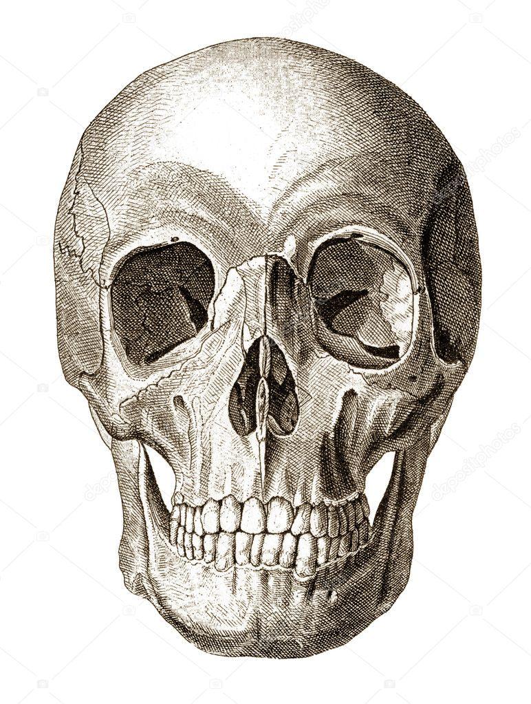 Skull illustration — Stock Photo #9355060