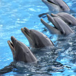 Five dolphins — Stock Photo #9388482