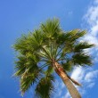 Green palm blue sky — Stock Photo