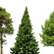 Three trees on white — Stockfoto