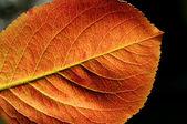Red yellow autumn leaf — Stock Photo