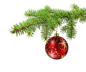 Red ball on christmas tree branch — Stock Photo