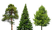 Three trees on white — Stock Photo