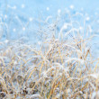 First snowfall impression — Stock Photo