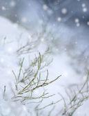 First snowfall impression — Foto de Stock
