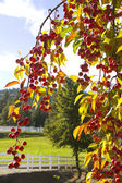 Okanagan fruit in sunshine — Stock Photo
