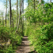 Green fresh spring hiking trail. - Stock Photo