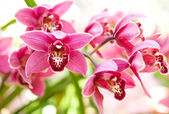 Orchids flowers macro in pink and soft background. — Stock Photo