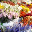 Stock Photo: Flowers at outdoor market stand.