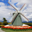 Wind mill and tulips. - Stock Photo