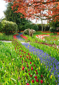 Spring landscape with tulips and blooming flowers. — Stock Photo