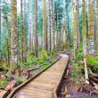 Forest and wood trail in rainy spring day. — Stock Photo