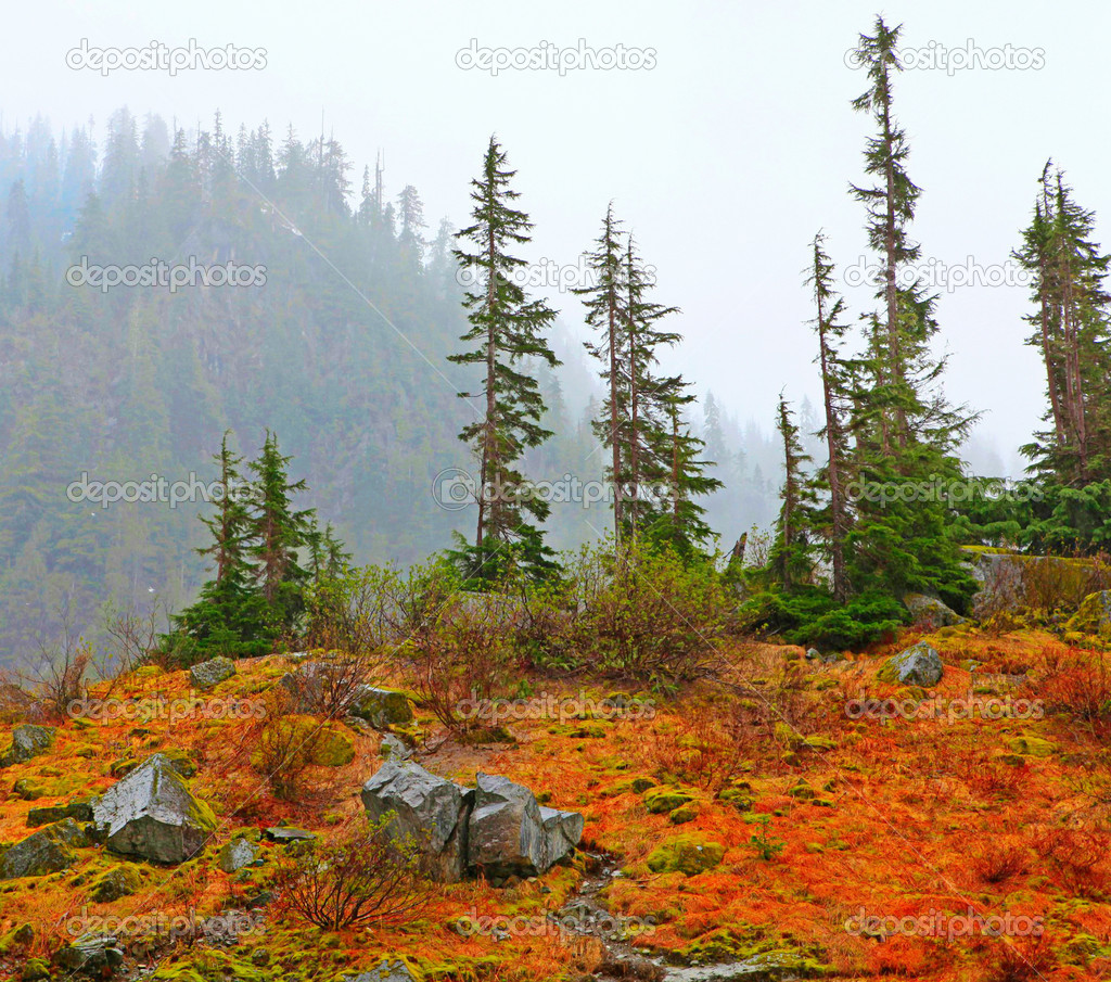 Ttees and orange moss in early spring. Big Four Ice Caves hike in WA state, May. — Stock Photo #9650413