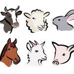 Farm animal set of symbols — Stock Vector