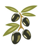 Stylized olives symbol isolated on a white background — Stock Vector