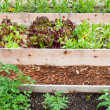 Raised Vegetable Gardens — Stock Photo