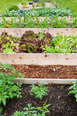 Raised Vegetable Gardens — Stock Photo