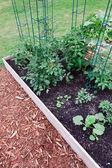 Raised Garden Tomatoes — Stock Photo