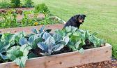 Dog in the Garden — Stock Photo