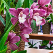 Stock Photo: Mauve Orchids