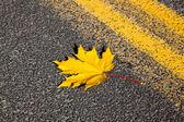 Gelben blatt unterwegs — Stockfoto