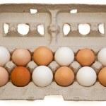 Egg Variety — Stock Photo