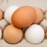 Eggs in Carton — Stock Photo